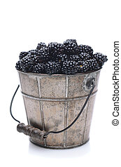 Pail of Fresh Picked Blackberries