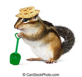 paille, rigolote, pelle, chapeau, écureuil rayé