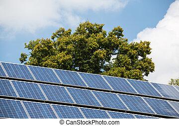 painéis, árvore, solar