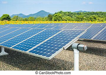 painéis, energia, terra cultivada, solar, girassol
