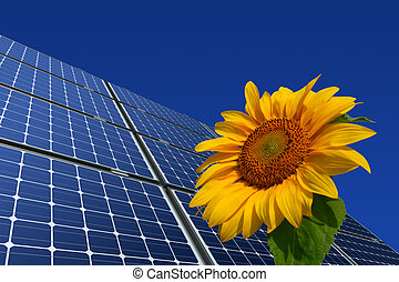painéis, solar, girassol
