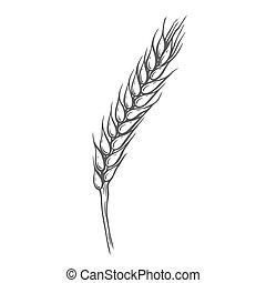 pain, blé, céréale, oreilles