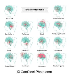 Pain Brain Illustration - Set of vector isolated ...