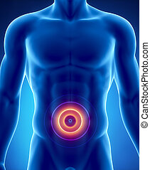 Pain in abdominal organs concept
