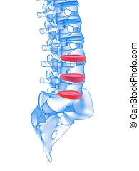 3d rendered illustration of highlighted discs in human spine