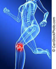 3d rendered illustration of human leg with highlighted knee joint