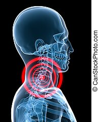 3d rendered x-ray illustration of human skeleton with highlighted skeletal neck