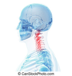 Painful neck - 3d rendered illustration of a painful neck