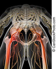Painful sciatic nerve - medically accurate illustration - ...