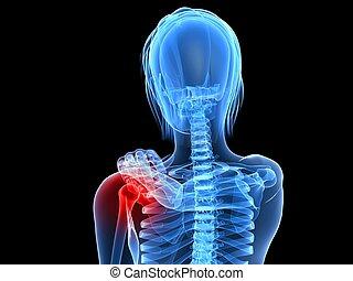 3d rendered illustration of a female skeleton with highlighted shoulder