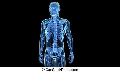 Painful shoulder - Animation showing a painful shoulder