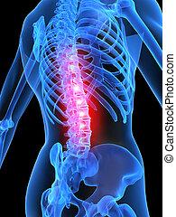3d rendered illustration of a human skeletal back with highlighted spine