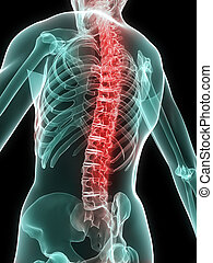 painful spine - 3d rendered illustration of a human skeleton...