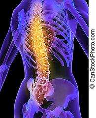 painful spine - 3d rendered illustration of a skeletal back ...