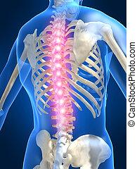 painful spine - 3d rendered illustration of a human skeletal...