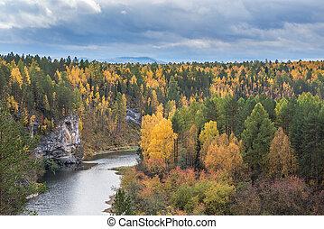 paint of autumn forest