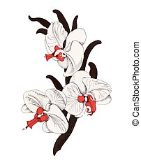 Painted bouquet of garden orchid flowers on white background.
