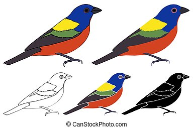 Painted Bunting bird in profile view - Vector art.