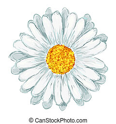 painted daisy on white background - illustration