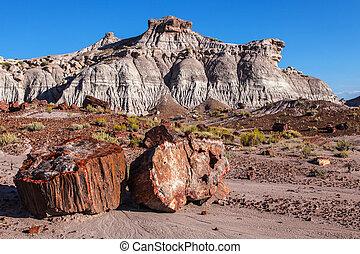 Painted Desert Badlands Petrified F