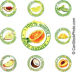 painted fruit icon vector