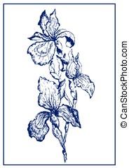Painted iris