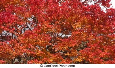 Painted maple tree