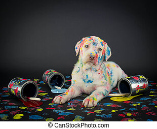 A silly Lab puppy looking like he just got caught getting into paint cans and making a colorful mess.