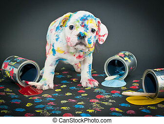 Painted Pooch - Silly Bulldog puppy that looks like he just...