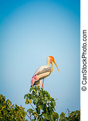 Painted Stork sitting on a tree