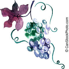 Painted watercolor grape. Vector illustration