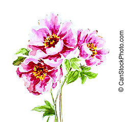 Painted watercolor peony flower isolated on white