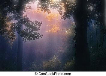 Painterly Autumn Trees and Light