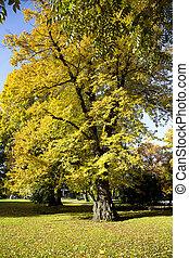 Paints of autumn