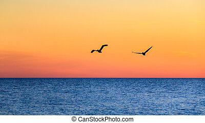 paio, pellicani, volare, tramonto