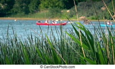pair canoes kayaks racing sports on wild water river through reeds.