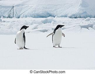 Pair of Adelie penguins (Pygoscelis adeliae) on an ice floe.