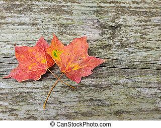 autumn maple leaves on rustic wood