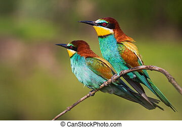 pair of beautiful colorful birds on a branch