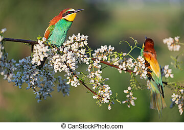 pair of birds of paradise on a flowering branch