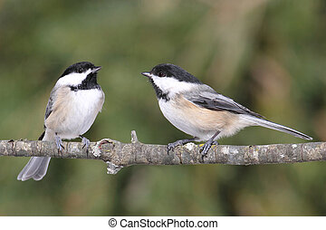 Pair of Birds on a Branch