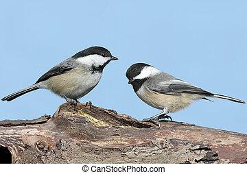 Pair of Birds on a Log