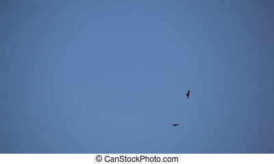 pair of birds soar high in the sky above the rocks. The...