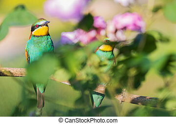 pair of colored birds sit among the flowers
