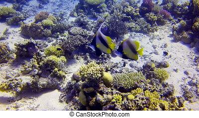 Pair of Colorful Fish