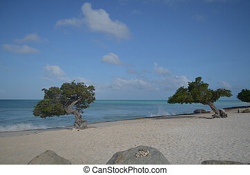 Pair of Divi Divi Trees with Waves Crashing