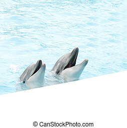 Pair of dolphins in light-blue