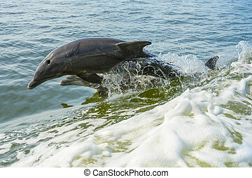 Pair of dolphins jump in parallel