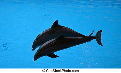 Pair of dolphins jumping out of water