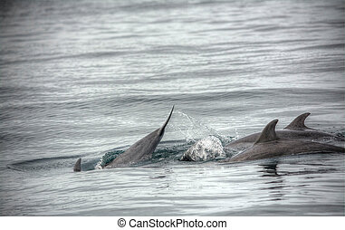 Pair of dolphins swimming at open sea